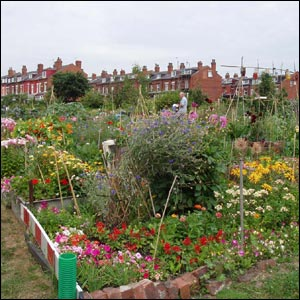 An Allotment in Burley, Leeds