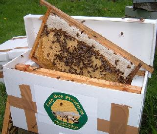 Beekeeping nucleus for sale
