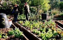 Allotment plot with separate beds for annual crop rotation