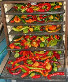 Drying chilli peppers in a food dehydrator