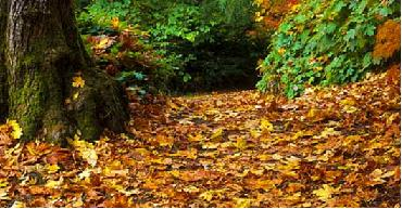 Turn fallen autumn leaves into leafmould