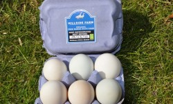 Free range duck eggs