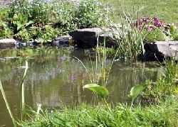 A garden pond attracts animals which eat pests