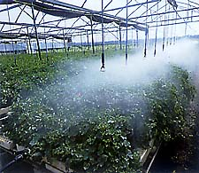 Greenhouse with water misting