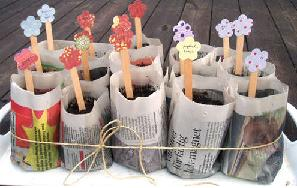 Newspaper plant pots filled with seedlings