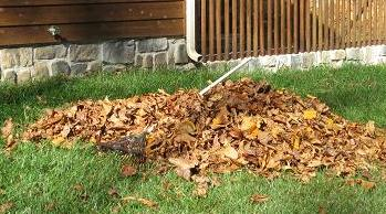 Rake up a pile of leaves for leafmould