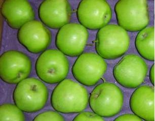 Stored apples can keep for many months